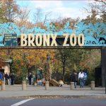 www.wcslistens.com – New York Zoos and Aquarium Survey